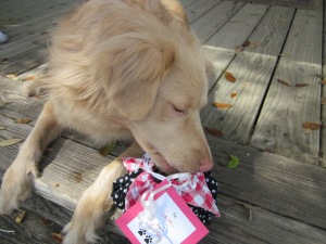dog treat gift bag birdie